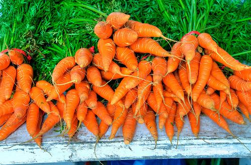 Organic Farming System